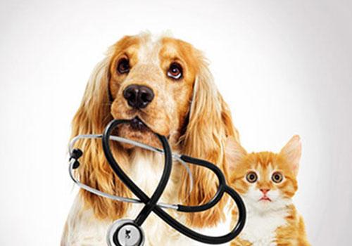 produits-vétérinaires-hellemmes-lille-fives